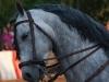 caballo (11)