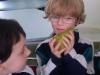 fruits24