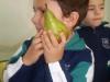 fruits25