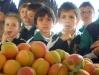fruits11